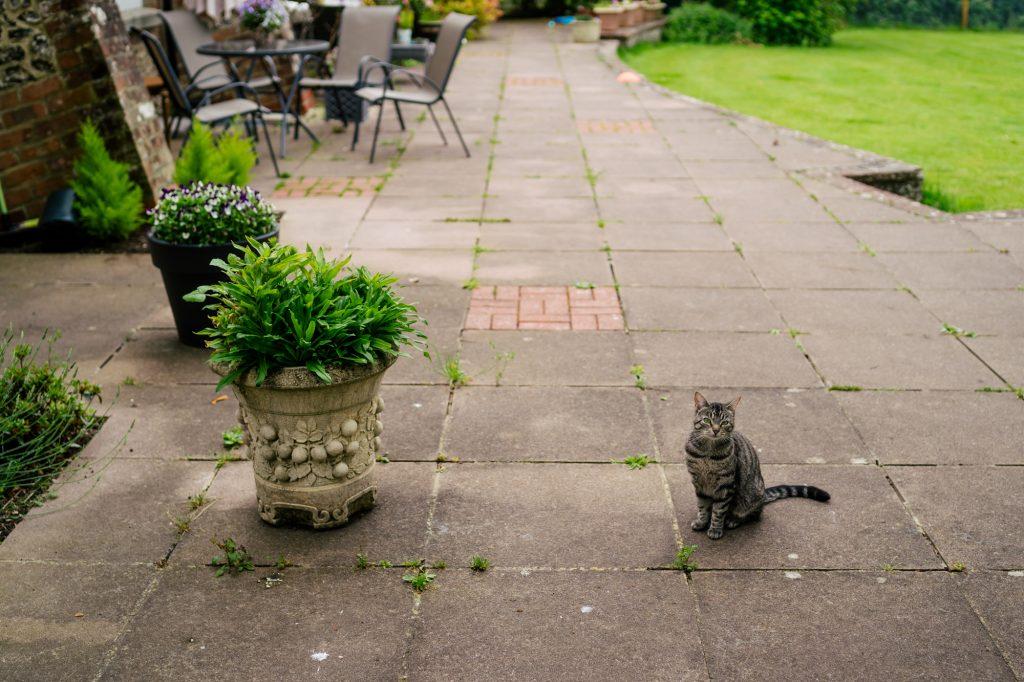 Cat at Essebourne Manor