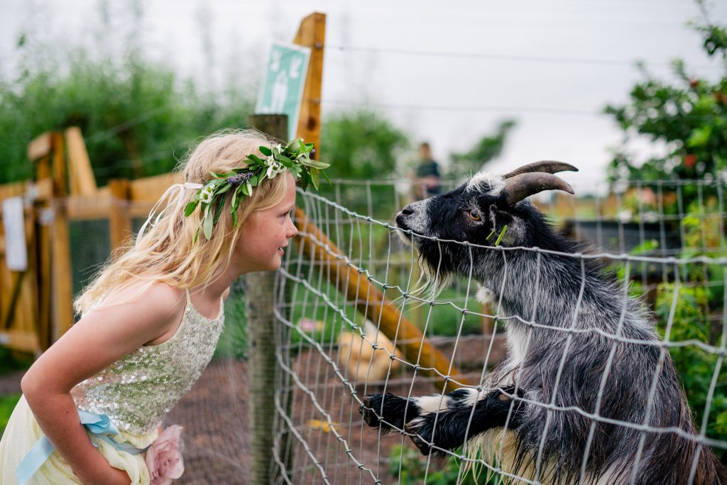 Kids and goat at wedding